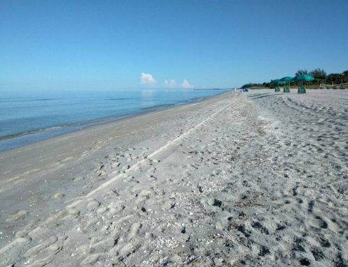 Beach & Water Quality Alert 10.5.18: Sanibel Captiva Conservation Foundation Reports Zero Red Tide Cell Count